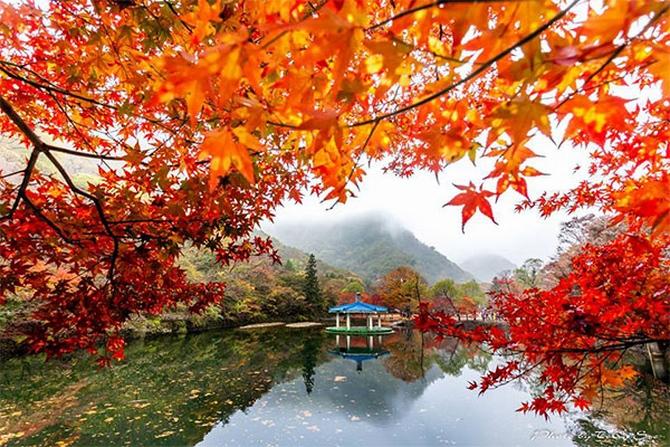 HÀN QUỐC (SEOUL – EVERLAND – ĐẢO NAMI – THÁP NAMSAN)