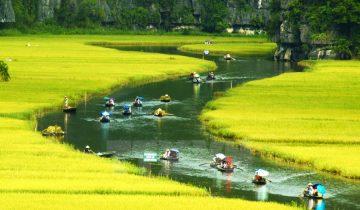 Tháng 5 này về Ninh Bình ngắm nhìn mùa lúa chín